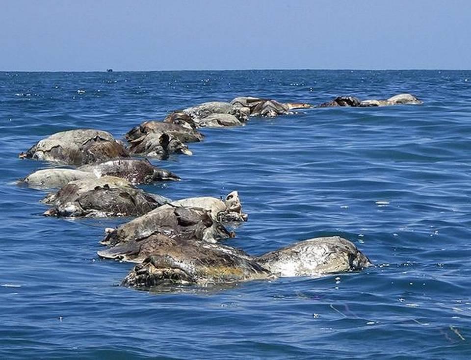 महासागर में व्याप्त कचड़े की समस्या