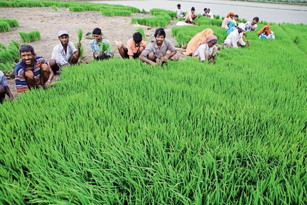कृषि ऋण माफी से परे जीवन रेखा